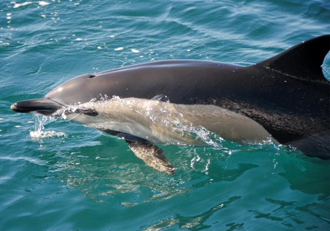 Photo Croisière et observation des dauphins au large d'Albufeira - côte de l'Algarve