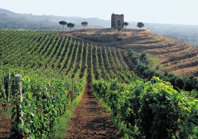 Excursion dans la région des Castelli Romani – dégustation de vins - Rome -