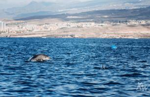 Dolphin and Whale Watching Cruise - Small Group - Tenerife